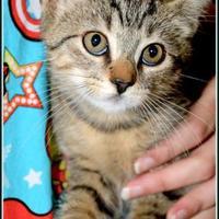 Adopt A Pet :: PRINGLE - Frederick, MD