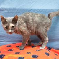 Adopt A Pet :: CRQ 18 - San Angelo, TX