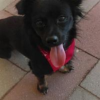 Adopt A Pet :: Tango - PHOENIX, AZ