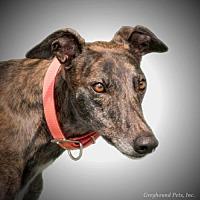 Adopt A Pet :: Idea - Woodinville, WA