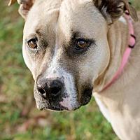 Adopt A Pet :: Sabrina - Asheville, NC