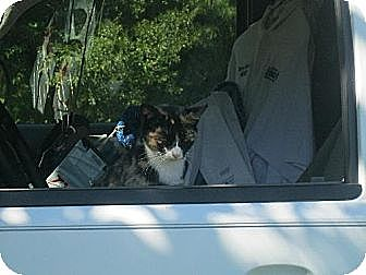 Calico Cat for adoption in Manning, South Carolina - Smudge