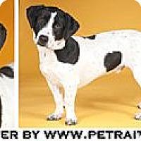 Adopt A Pet :: Trooper - Chicago, IL