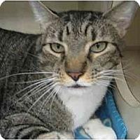 Adopt A Pet :: J.T. - Mesa, AZ