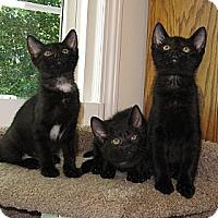 Adopt A Pet :: Jelly Bean - Harrisburg, NC