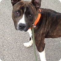 Adopt A Pet :: #143-14 ADOPTED! - Zanesville, OH