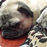 Adopt A Pet :: Allie - Avondale, PA
