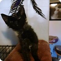 Adopt A Pet :: Stardust - Walla Walla, WA