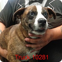 Adopt A Pet :: Truck - Greencastle, NC