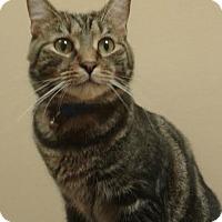 Adopt A Pet :: Cracker Jack Gives Kisses - McDonough, GA