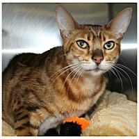 Adopt A Pet :: Shelly - Forked River, NJ