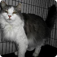 Adopt A Pet :: Agatha - Chattanooga, TN