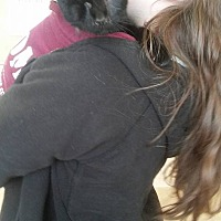 Adopt A Pet :: Blade - Locust, NC