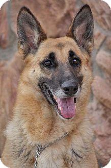 German Shepherd Dog Mix Dog for adoption in Los Angeles, California - Rio von Rohr