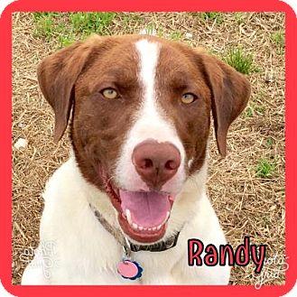 Retriever (Unknown Type) Mix Dog for adoption in Jasper, Indiana - Randy