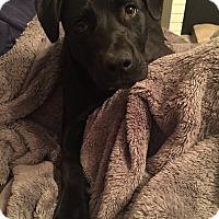 Adopt A Pet :: Rowan - oklahoma city, OK