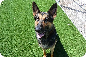 Mixed Breed (Large) Mix Dog for adoption in Meridian, Idaho - Kilo