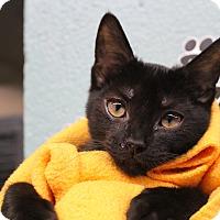 Adopt A Pet :: Jaxon - Sarasota, FL