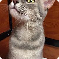 Adopt A Pet :: Cleo - Morganton, NC