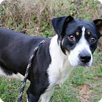 Adopt A Pet :: Erin - Sarasota, FL