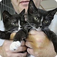 Adopt A Pet :: Dink & Donk - Cape Girardeau, MO