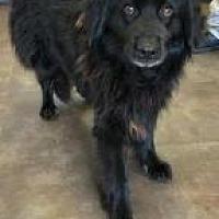 Adopt A Pet :: Bill - Alpharetta, GA