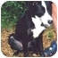 Photo 2 - Border Collie Mix Dog for adoption in Baldwin, New York - Bella