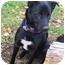 Photo 3 - Labrador Retriever/Spitz (Unknown Type, Medium) Mix Dog for adoption in McArthur, Ohio - MURPHY