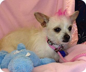Terrier (Unknown Type, Small) Mix Dog for adoption in San Antonio, Texas - Belle