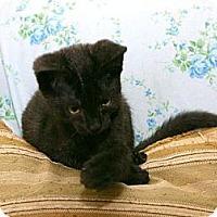 Adopt A Pet :: Nanuck - Cleveland, OH