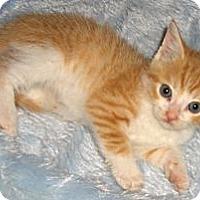 Adopt A Pet :: Deuce - Richmond, VA