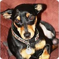 Adopt A Pet :: Spike - Topeka, KS