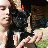 Adopt A Pet :: Lalia - South Jersey, NJ
