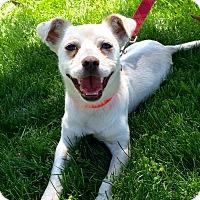 Adopt A Pet :: Prince - Mission Viejo, CA