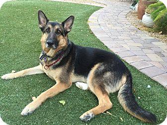 German Shepherd Dog Mix Dog for adoption in Phoenix, Arizona - Carlos