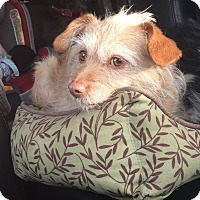 Adopt A Pet :: Karley - Greeley, CO