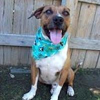 Adopt A Pet :: Chuck - Doylestown, PA