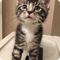 Adopt A Pet :: Luke - Reston, VA