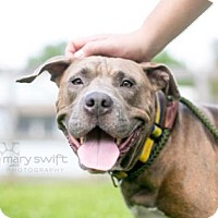 Adopt A Pet :: Snow White - Reisterstown, MD