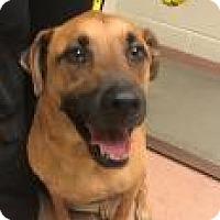 Adopt A Pet :: Bubby 244B - Columbus, GA