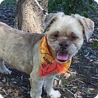 Adopt A Pet :: LUPO - Elk Grove, CA