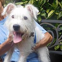 Adopt A Pet :: Bouser - Alpharetta, GA