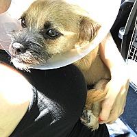 Adopt A Pet :: Tiny - Redmond, WA