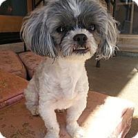 Adopt A Pet :: Billy - Acton, CA