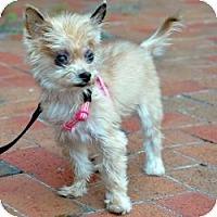 Adopt A Pet :: Ruby - Tallahassee, FL