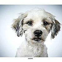 Adopt A Pet :: Giuseppe - New York, NY