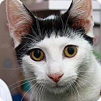 Adopt A Pet :: Sidekick - Lombard, IL