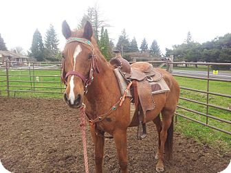 Arabian Mix for adoption in Aumsville, Oregon - Casey