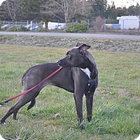 Adopt A Pet :: Kaylee - Tumwater, WA
