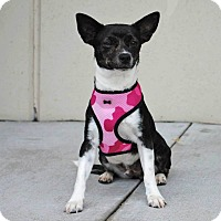Adopt A Pet :: Lucy - Weatherford, TX